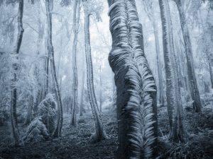 درخت های یخ زده
